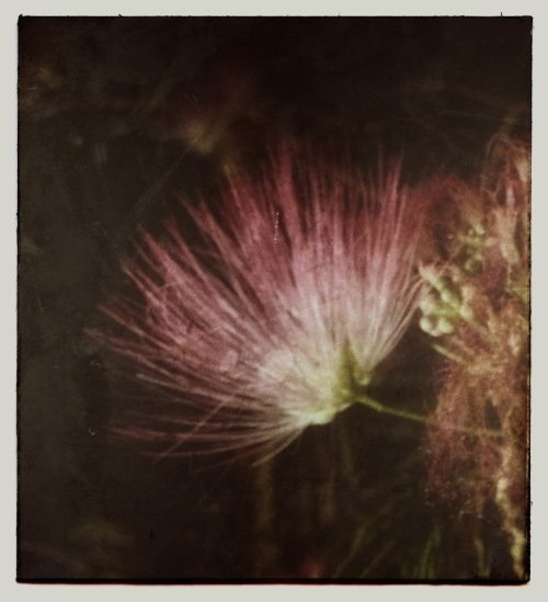 featherbloom