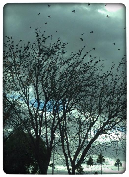 birdleaves