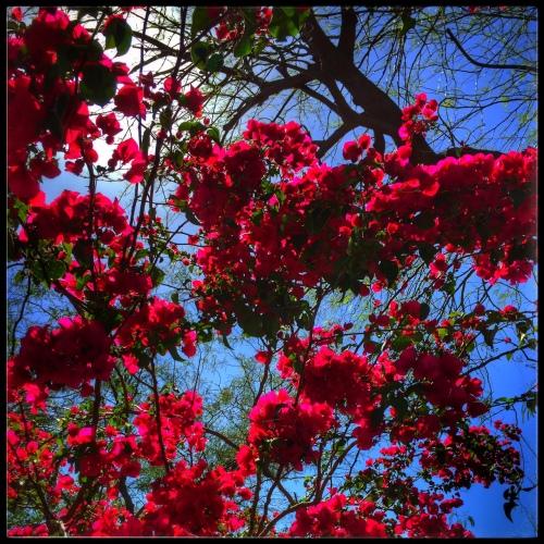 bloomeclipse